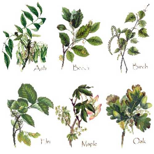 Types Of Plants And Trees Rz57 Roccommunity